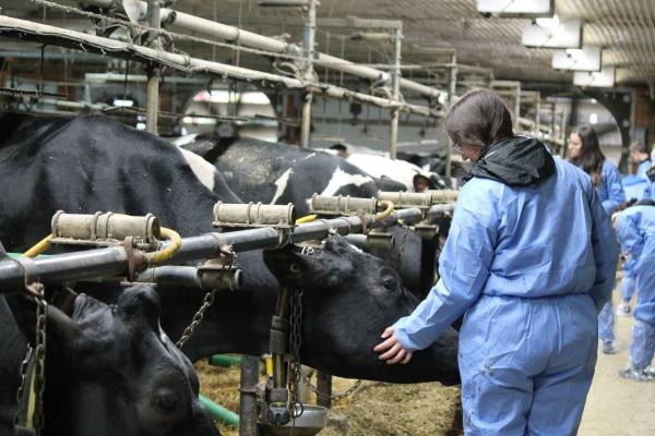 Photo from farm visit feature woman petting a cow